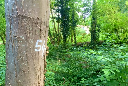 [Espaces verts] Pourquoi certains arbres sont-ils numérotés ?